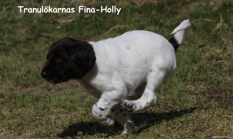 Tranulökarnas Fina-Holly